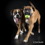 The Soul of an Animal: Beck and Ken Drake, Zoo Studio Pet Photography – Episode 55